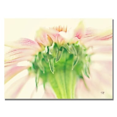 Trademark Fine Art Lois Bryan 'Daisy II' Canvas Art