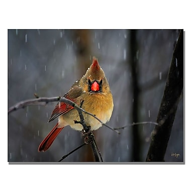 Trademark Fine Art Lois Bryan 'Snowy Cardinal' Canvas Art 22x32 Inches