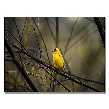 Trademark Fine Art Lois Bryan 'Golden Finch' Canvas Art 18x24 Inches
