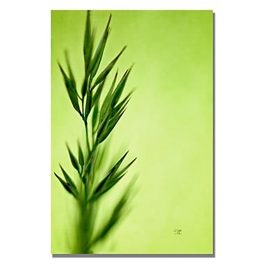 Trademark Fine Art Lois Bryan 'Keep Green II' Canvas Art 30x47 Inches