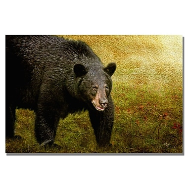 Trademark Fine Art Lois Bryan 'Big Black Bear' Canvas Art 16x24 Inches