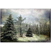 Trademark Fine Art Lois Bryan 'Frosty' Canvas Art Ready to Hang