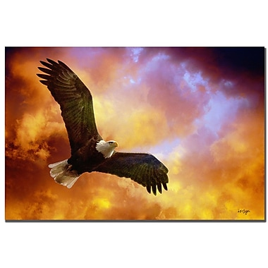 Trademark Fine Art Lois Bryan 'Flight of the Eagle' Canvas Art 16x24 Inches