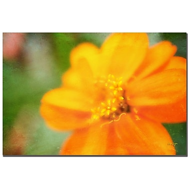 Trademark Fine Art Lois Bryan 'Golden Zinnia' Canvas Art 22x32 Inches