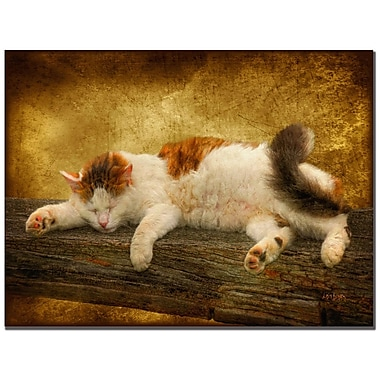 Trademark Fine Art Lois Bryan 'Sleeping Kitty' Canvas Art 30x47 Inches