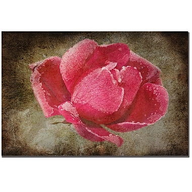 Trademark Fine Art Lois Bryan 'Frosted Rose' Canvas Art 16x24 Inches