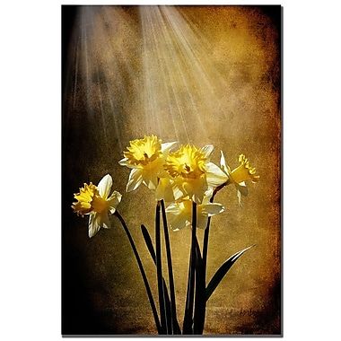 Trademark Fine Art Lois Bryan 'Spring Sun' Canvas Art 16x24 Inches