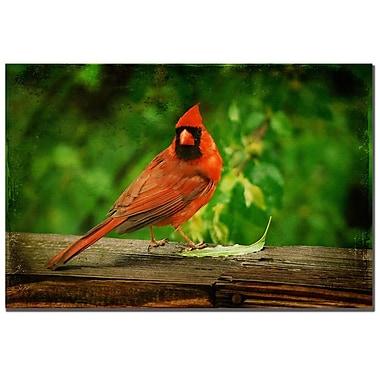Trademark Fine Art Lois Bryan 'Cardinal in Summer' Canvas Art 16x24 Inches