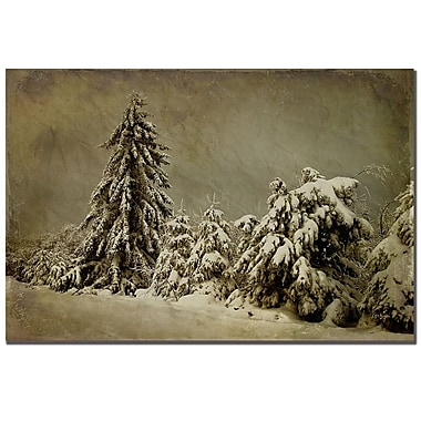 Trademark Fine Art Lois Bryan 'Winter's Wrath' Canvas Art 22x32 Inches