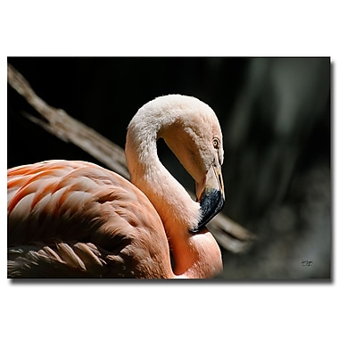 Trademark Fine Art Lois Bryan 'The Sacred Old Flamingoes' Canvas Art