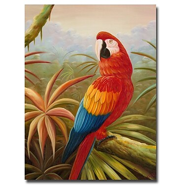 Trademark Fine Art Rio 'Amazon Rain Forest' Canvas Art 26x32 Inches