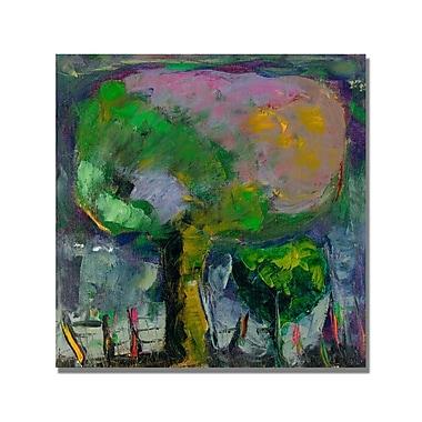 Trademark Fine Art 'Boyer Niebla de Colores' Canvas Art