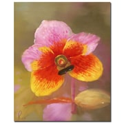 Trademark Fine Art 'Orange-Pink Orchid' Canvas Art 26x32 Inches