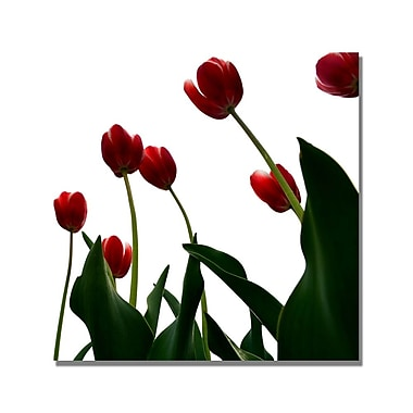 Trademark Fine Art Michelle Calkins 'Red Tulips from Bottom Up V' Canvas Art