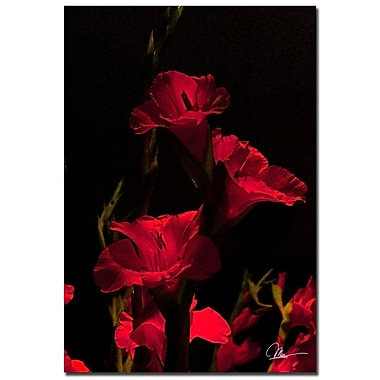 Trademark Fine Art Martha Guerra 'Gladiolus X' Canvas Art
