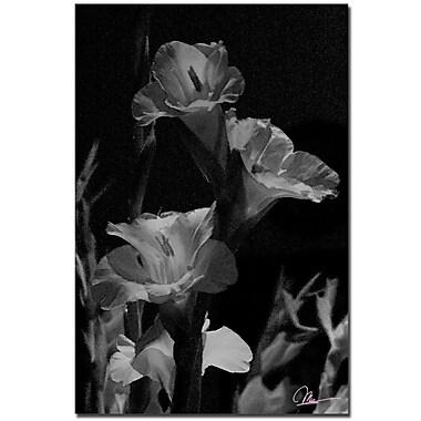Trademark Fine Art Martha Guerra 'Abstract II' Canvas Art