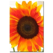 Trademark Fine Art Martha Guerra 'Sunflower VI' Canvas Art