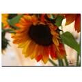 Trademark Fine Art Martha Guerra 'Sunflowers VIII' Canvas Art