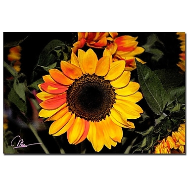 Trademark Fine Art Martha Guerra 'Sunflowers XII' Canvas Art