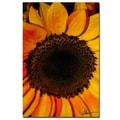 Trademark Fine Art Martha Guerra 'Sunflowers XIII' Canvas Art