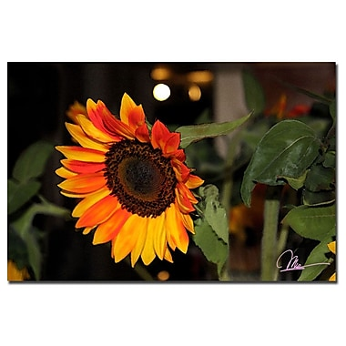 Trademark Fine Art Martha Guerra 'Sunflowers IX' Canvas Art