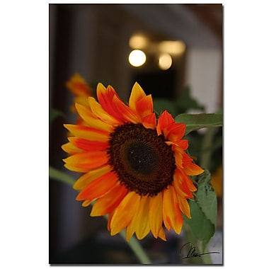 Trademark Fine Art Martha Guerra 'Sunflower Bloom' Canvas Art