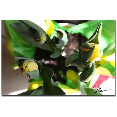 Trademark Fine Art Martha Guerra 'Tulips II' Canvas Art, MG0125-C1624GG