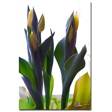 Trademark Fine Art Martha Guerra 'Tulips VIII' Canvas Art