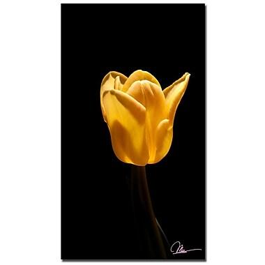 Trademark Fine Art Martha Guerra 'Tulip Blooms III' Canvas Art, MG0135-C2232GG