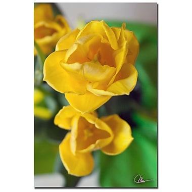 Trademark Fine Art Martha Guerra 'Tulip Blooms IX' Canvas Art