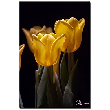 Trademark Fine Art Martha Guerra 'Yellow Blooms II' Canvas Art