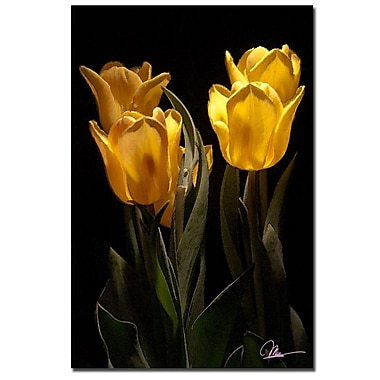 Trademark Fine Art Martha Guerra 'Yellow Blooms III' Canvas Art