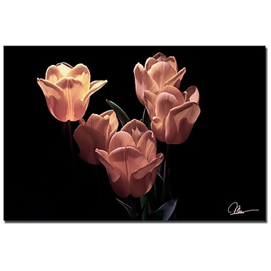 Trademark Fine Art Martha Guerra 'Yellow Blooms V' Canvas Art