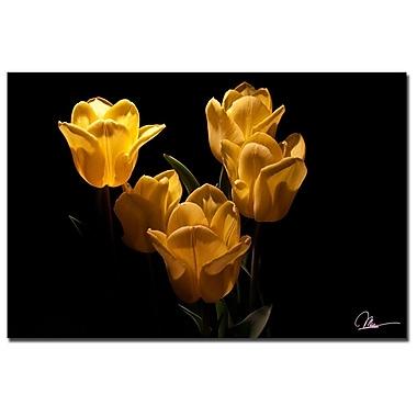 Trademark Fine Art Martha Guerra 'Yellow Blooms VII' Canvas Art, MG01567-C1624GG