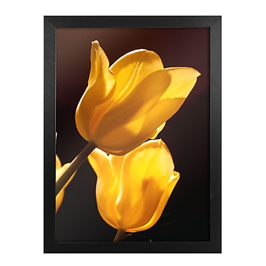 Trademark Fine Art Tulips Canvas Art Ready to Hang