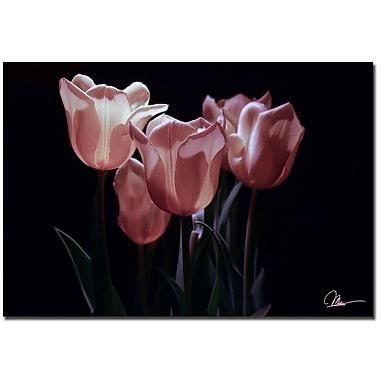 Trademark Fine Art Martha Guerra 'Yellow Blooms VII' Canvas Art, MG0161-C2232GG