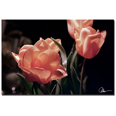 Trademark Fine Art Martha Guerra 'Yellow Tulips VIII' Canvas Art