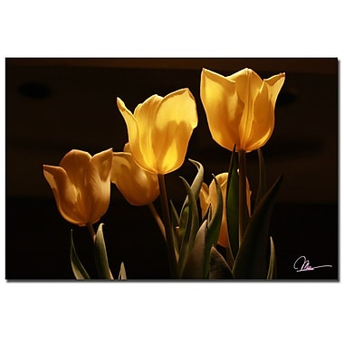 Trademark Fine Art Martha Guerra 'Tulips II' Canvas Art, MG0169-C1624GG