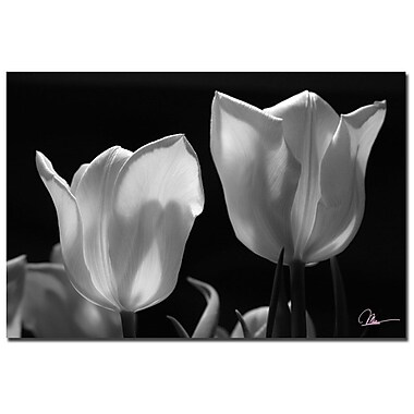 Trademark Fine Art Martha Guerra 'Tulips III' Canvas Art