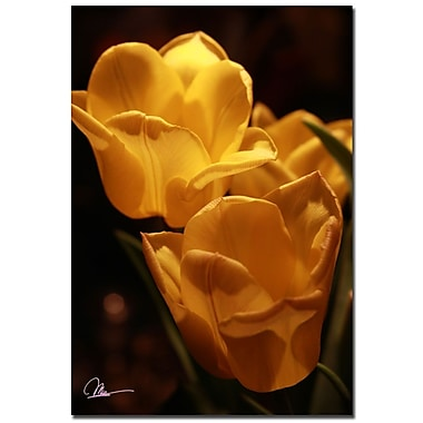 Trademark Fine Art Martha Guerra 'Bouquet of Tulips' Canvas Art