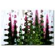 Trademark Fine Art Martha Guerra 'Pink Tulip III' Canvas Art