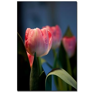 Trademark Fine Art Martha Guerra 'A Pair of Tulips II' Canvas Art
