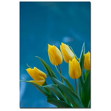 Trademark Fine Art Martha Guerra 'Yellow Tulips' Canvas Art