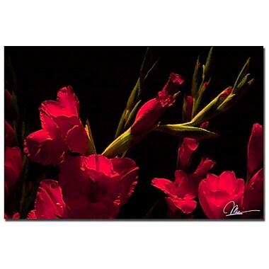 Trademark Fine Art Martha Guerra 'Gladiolus III' Canvas Art