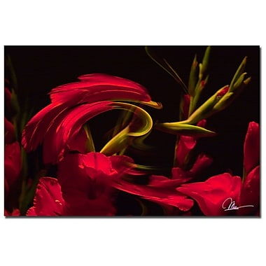 Trademark Fine Art Martha Guerra 'Gladiolus IV' Canvas Art