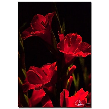 Trademark Fine Art Martha Guerra 'Gladiolus V' Canvas Art