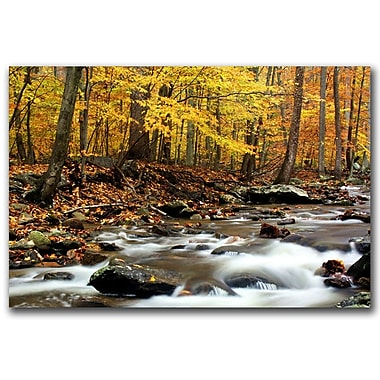 Trademark Fine Art Autumn's Fire by CATeyes Canvas Ready to Hang 16x24 Inches