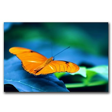Trademark Fine Art To be Free by CATeyes Canvas Ready to Hang 16x24 Inches