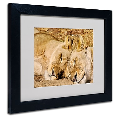 Trademark Fine Art CATeyes 'National Zoo-Lions' Matted Art Black Frame 11x14 Inches
