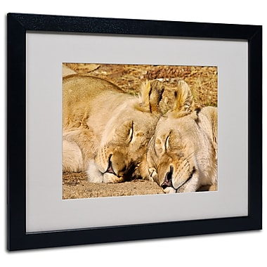 Trademark Fine Art CATeyes 'National Zoo-Lions' Matted Art Black Frame 16x20 Inches